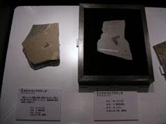 白亜紀のゴ