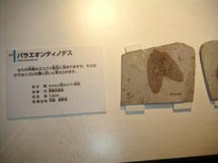 白亜紀のカメムシ